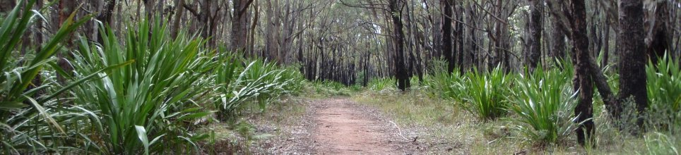 post-fire grove, Dharawal State Conservation area
